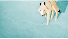 Focus Visual Design : Talking Animals Animation Studio